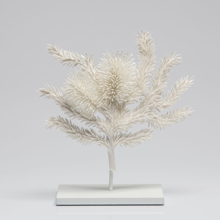 Untitled (Heath Banksia)
