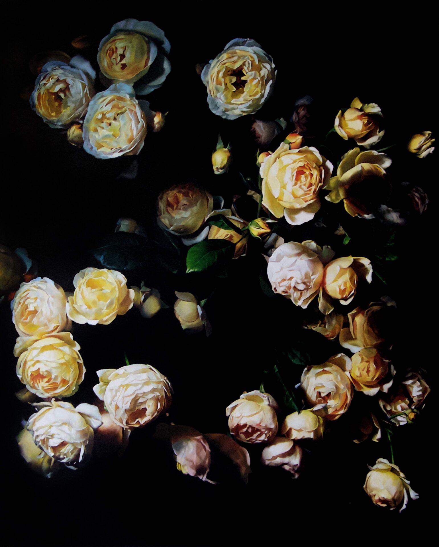 Roses 08