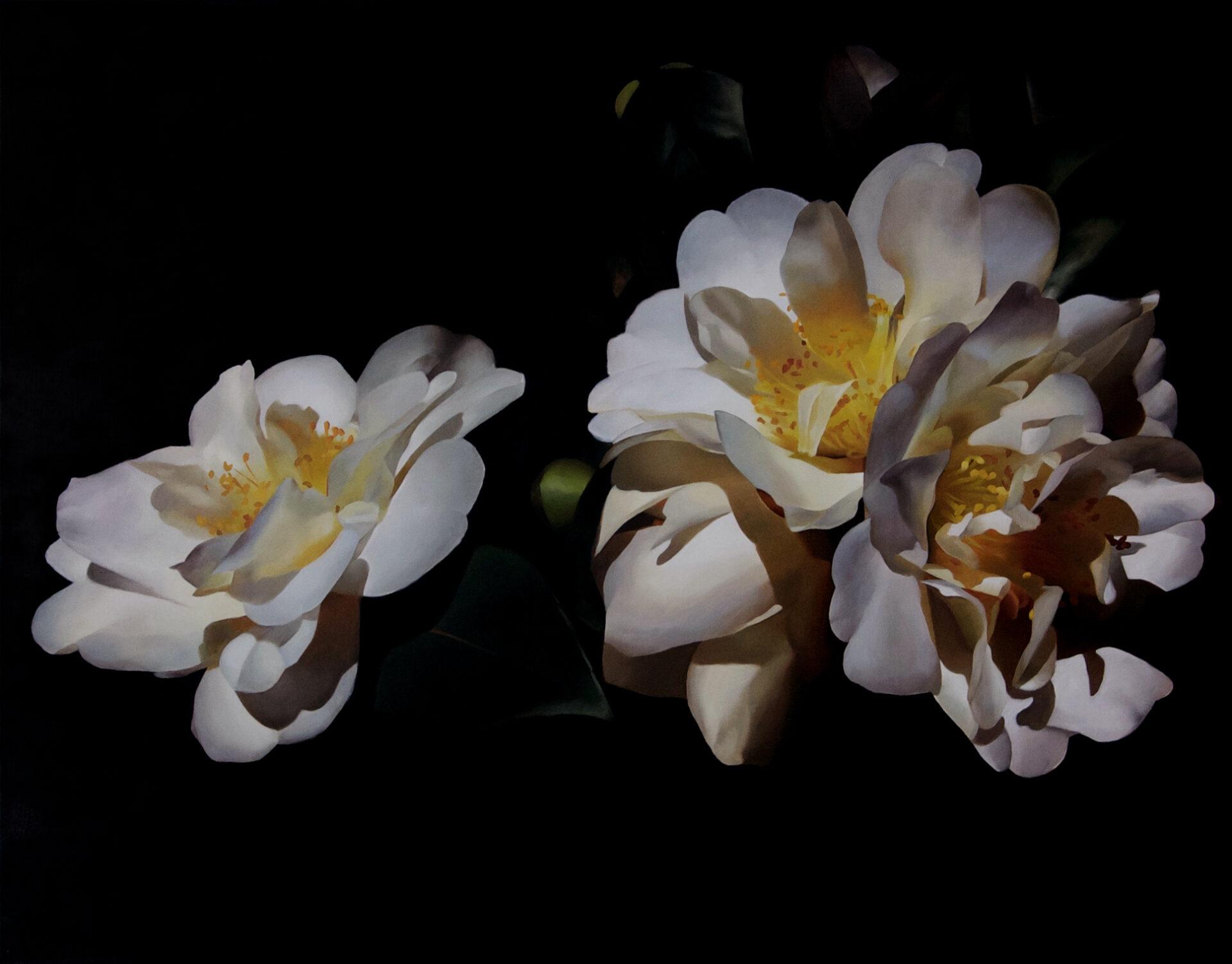 Camellias 02